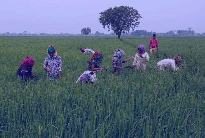 نکات کشاورزی ایران